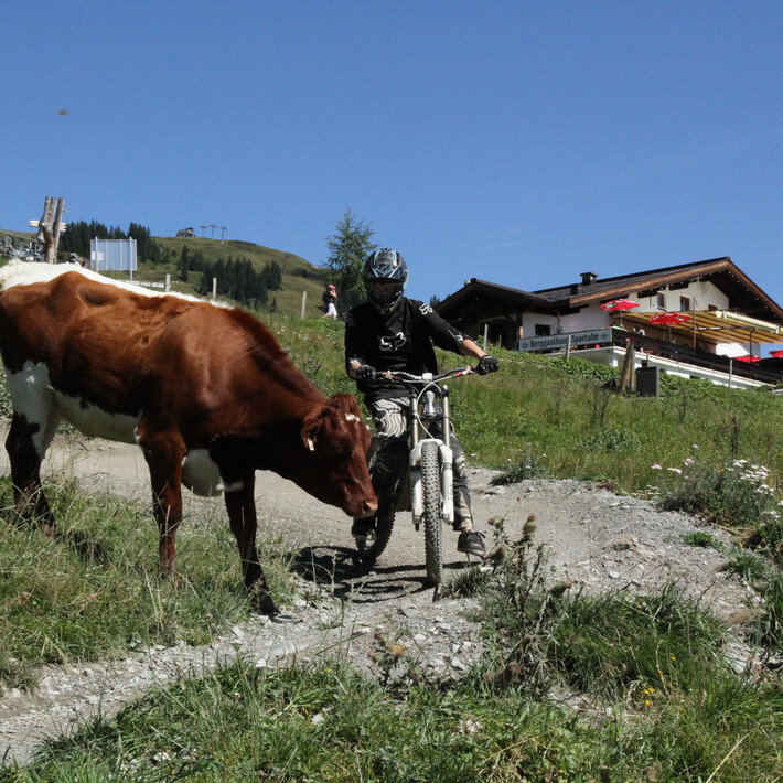 Even cows like us | © The Gap / Michael Gölles