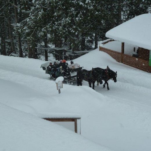 Return to the meetingpoint on a horsesleigh | © Privat