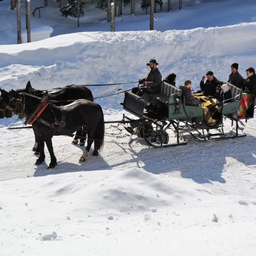 horse sleigh ride in the valley head | © gesamt.at