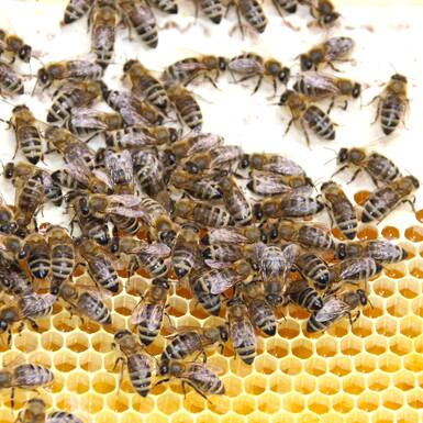 Summing bees on the honeycomb | © Privat