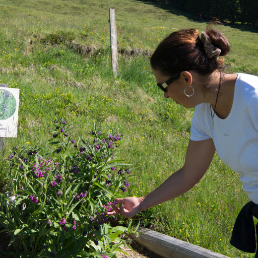 Tanja inspects the Comfrey | © Edith Danzer