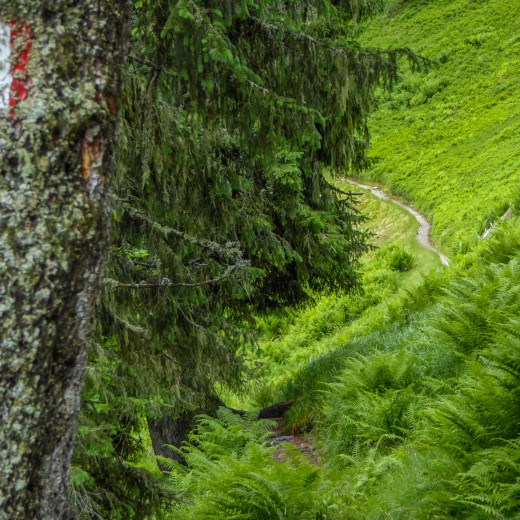 Trail at the crossing to Kohlmaiskopf | © Martin Moser