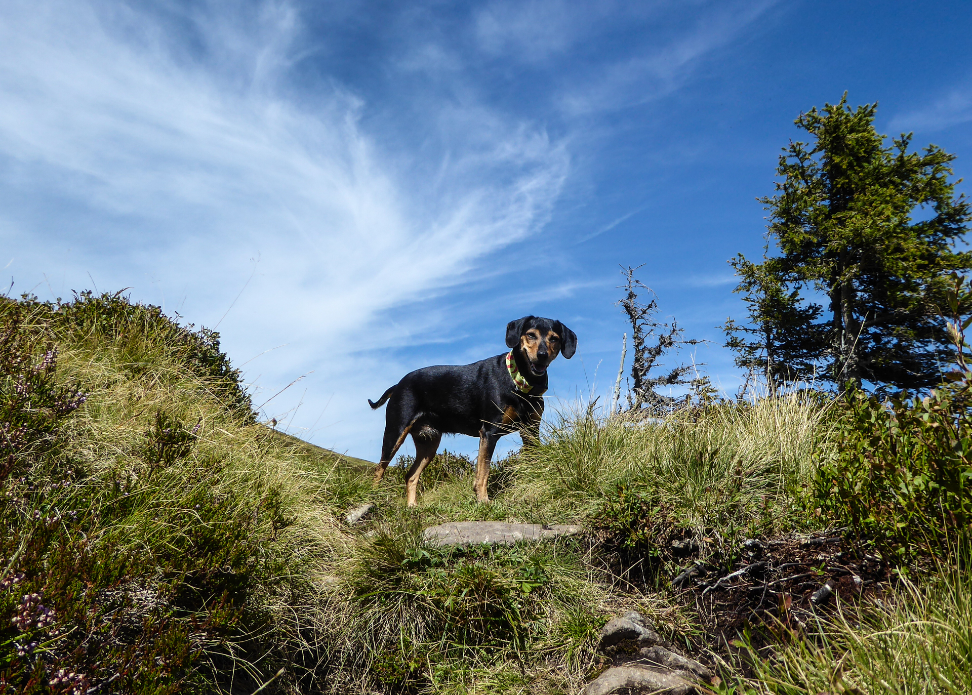 wandern mit hund saalbach hinterglemm. Black Bedroom Furniture Sets. Home Design Ideas