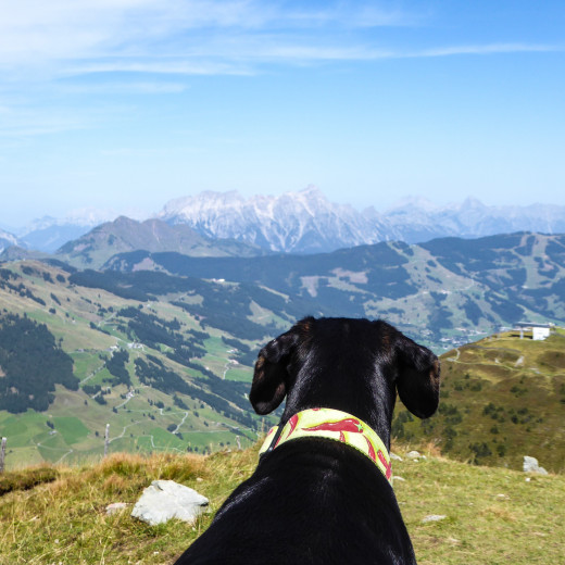 View from a dog's perspective. | © gehlebt.at