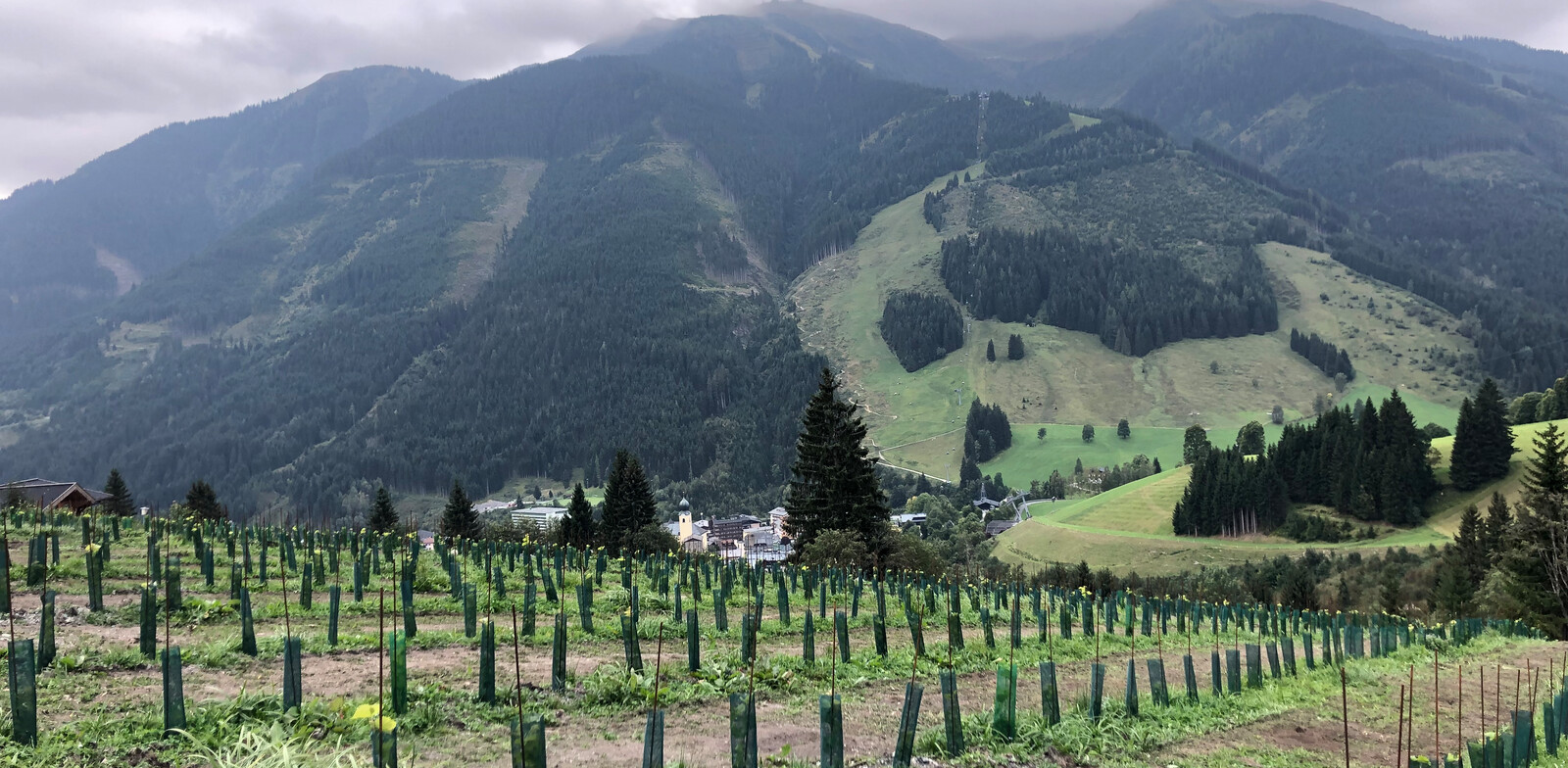 The vineyard of the Alpenwinzerei