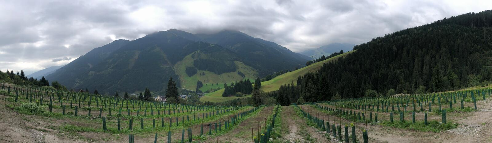 Saalbach Vineyard
